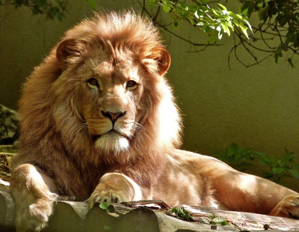 מלך האריות סרט לילדים